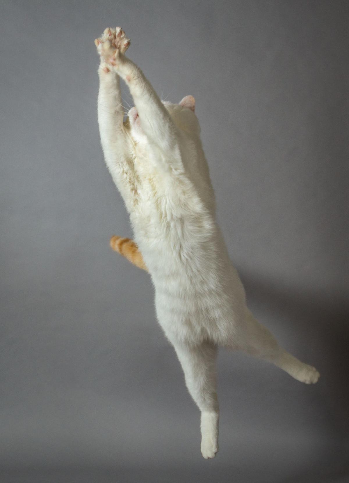 Vet Tech leaping cat