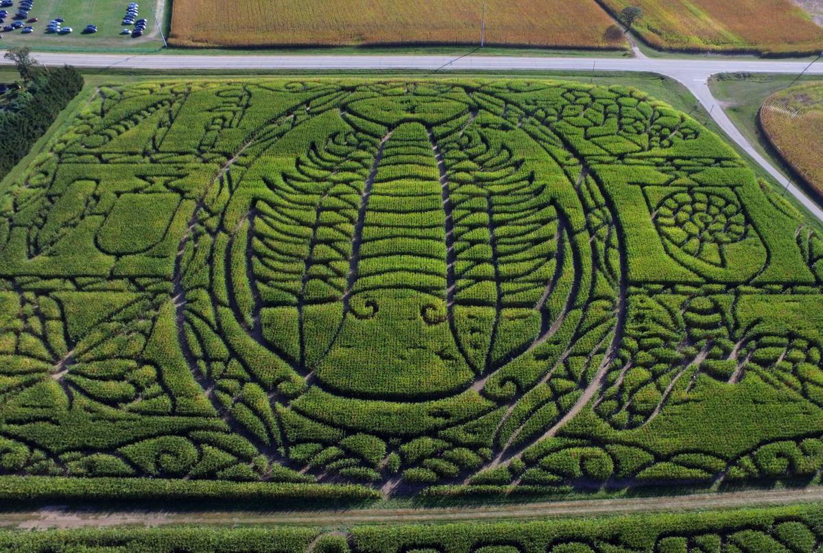 Treinen corn maze 2017