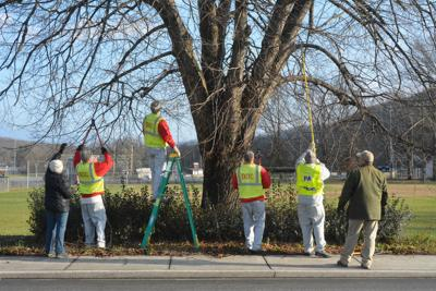 Sci Tree Tenders Help Beautify