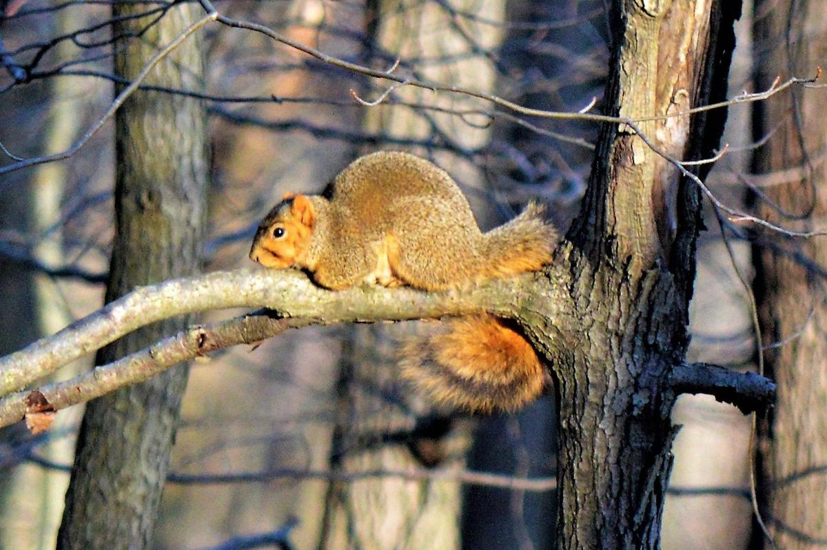 Mountains Calling: squirrel on branch