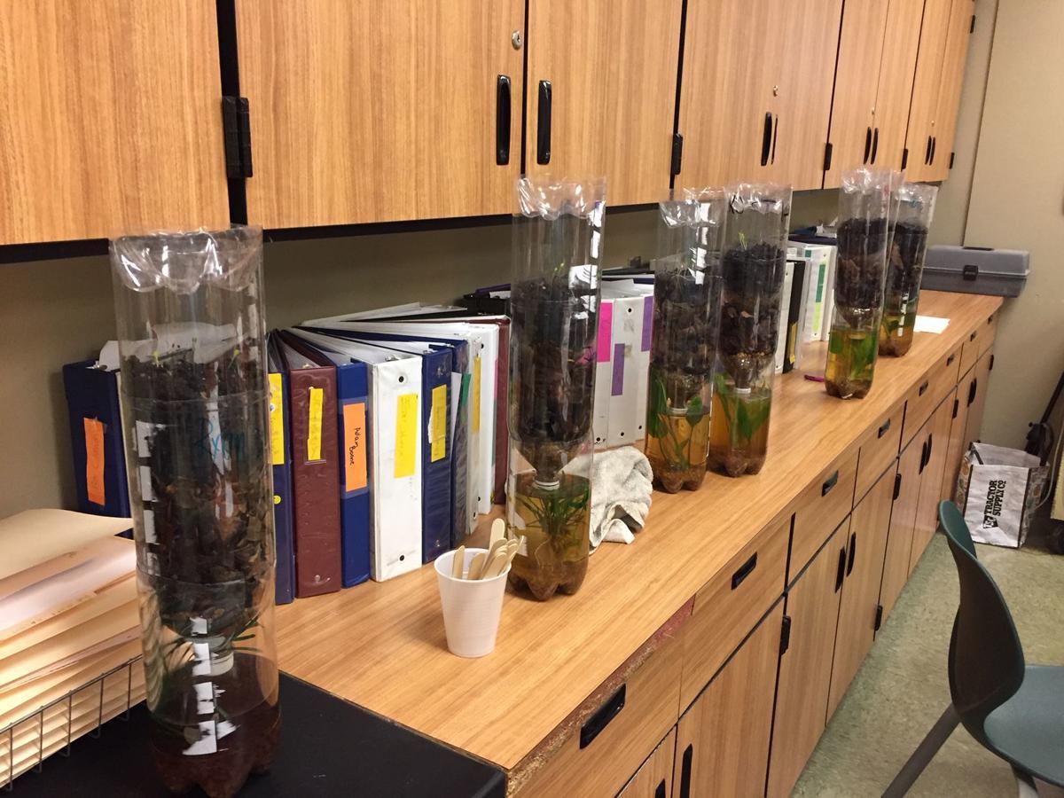 Ecosystems Bottles.JPG