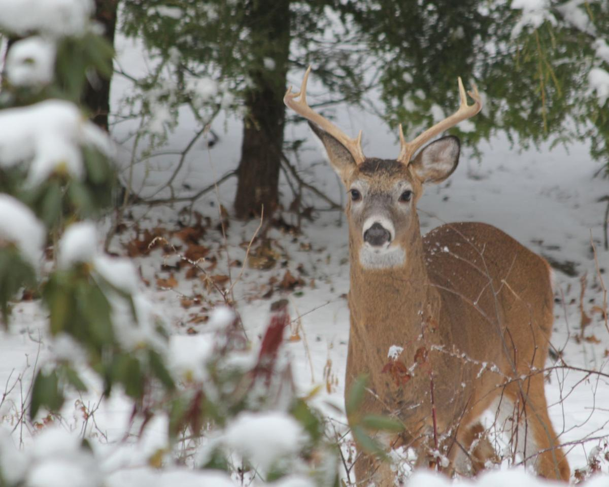 Concurrent deer season best for all, well almost all ...