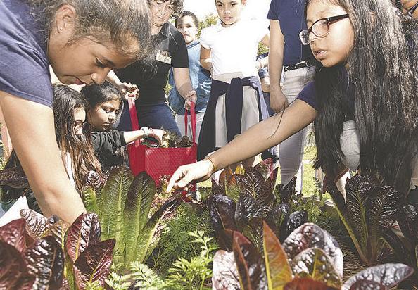 School garden encourages growing, eating produce among children