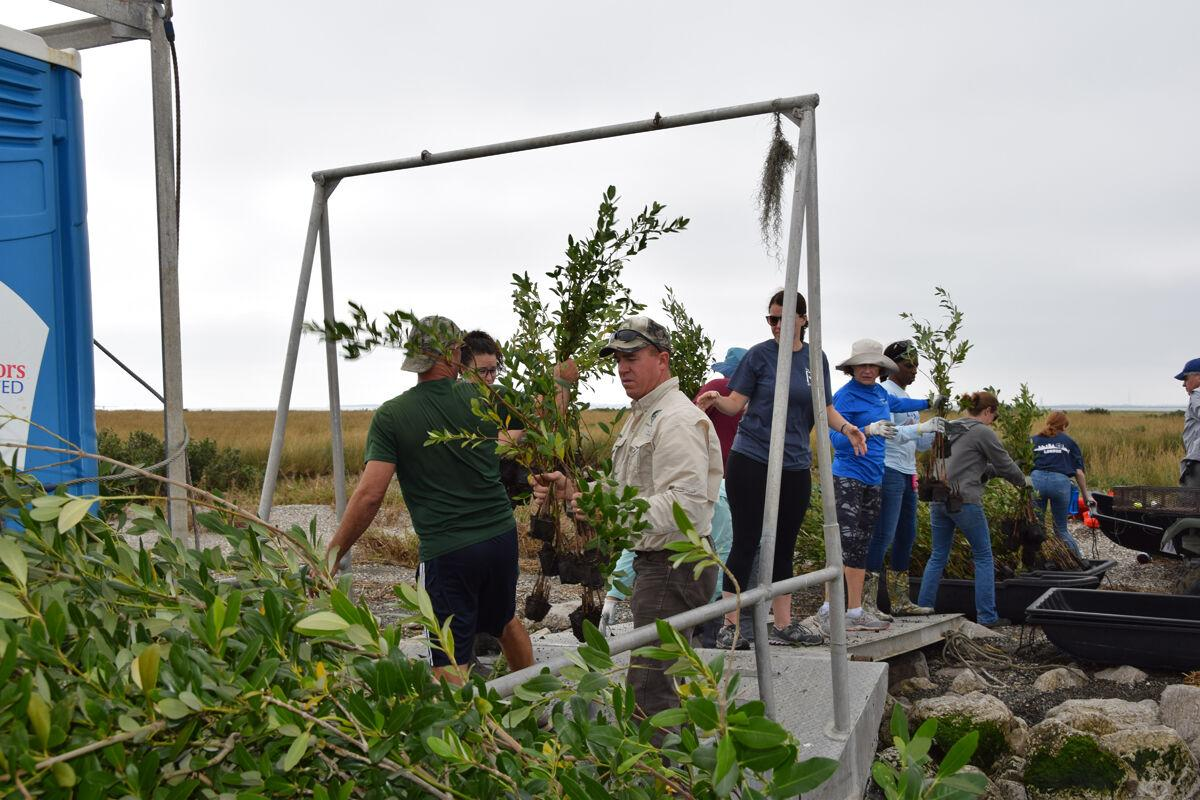 Baton Rouge Replanting