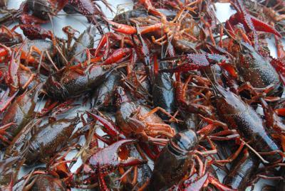 Lack of local interest hurt crawfish season
