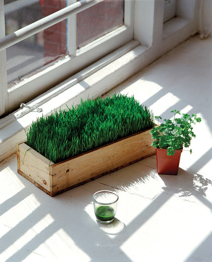 Experiment with growing edibles indoors with window gardening