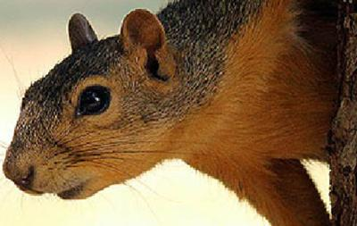 WMAs provide hunters ample opportunity to bag squirrels