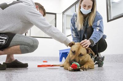 Pandemic Pets