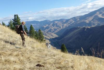 Scenic hunter featured