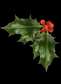 Looking for a little holiday spirit? Go for a Modern yule walk