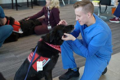 therapy dogs ICOM