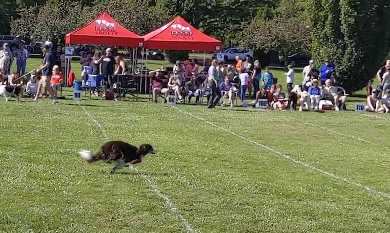 Frisbee Fest