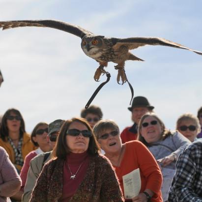 Birds Of Prey Photo Gallery Idahopress Com