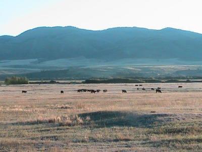 grazing idaho generic
