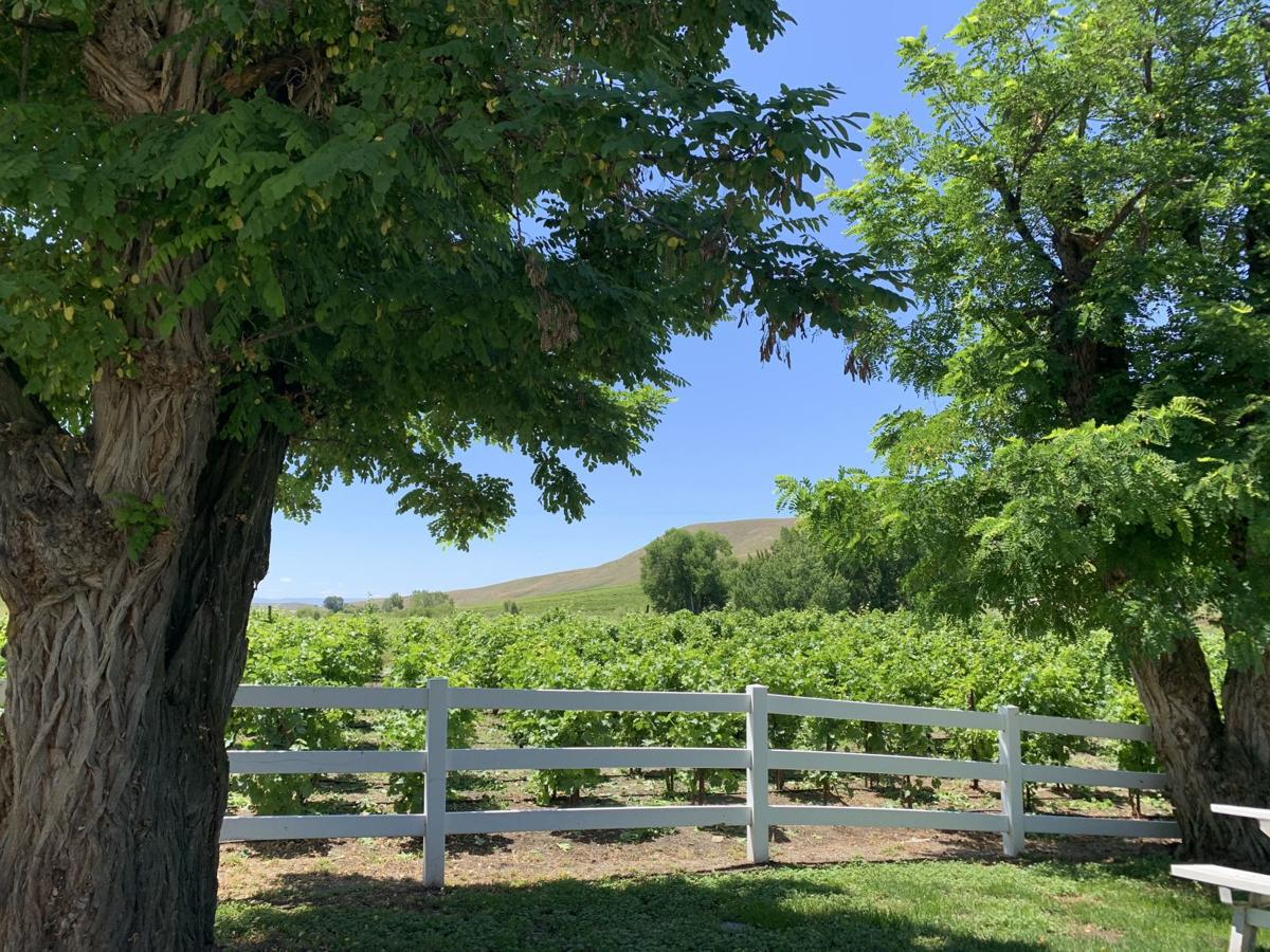 Three Horse Ranch Vineyards