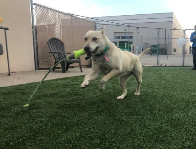 Dogs of the Week: Misty