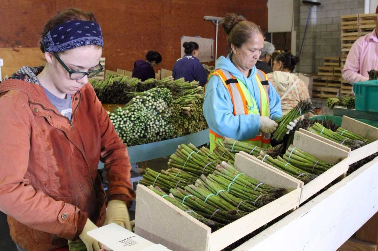 Canyon County approves tax break for Owyhee Produce Parma expansion   Idaho Press