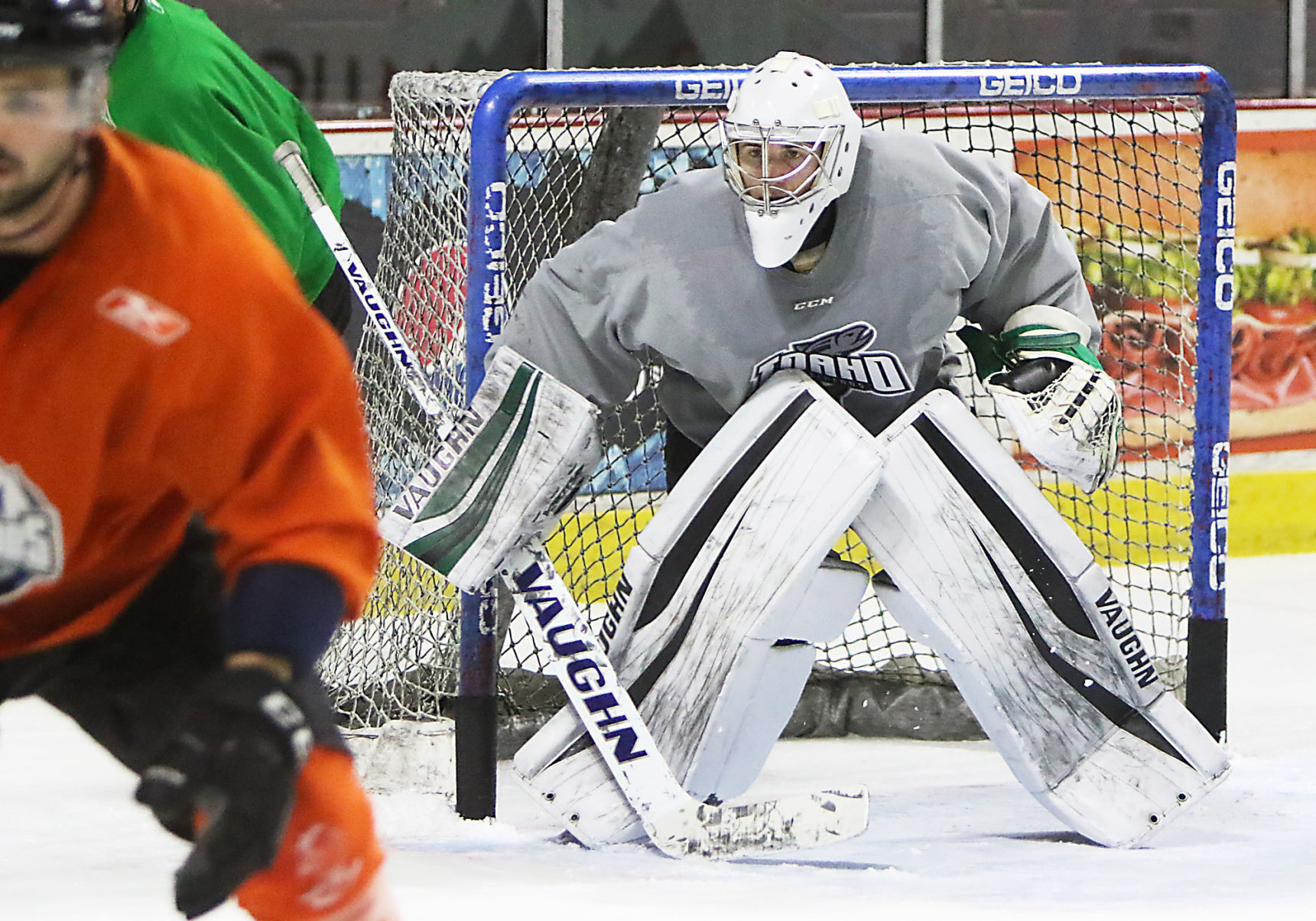 ECHL: After Nearly Giving Up Hockey, Sholl Shining In Net For Steelheads