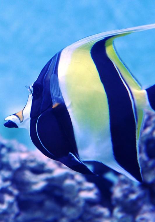 Idaho Aquarium Plans December Opening Complete News Coverage