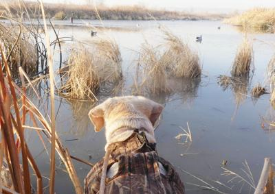 New Year, new hunting/fishing licenses needed