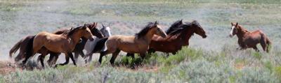 26 years managing wild horses in Gem