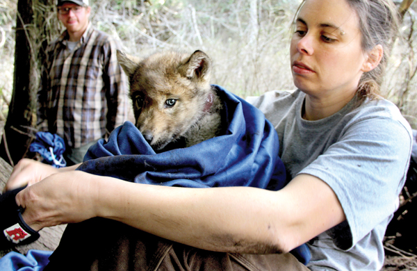Outdoors Monitoring Wolf Pups