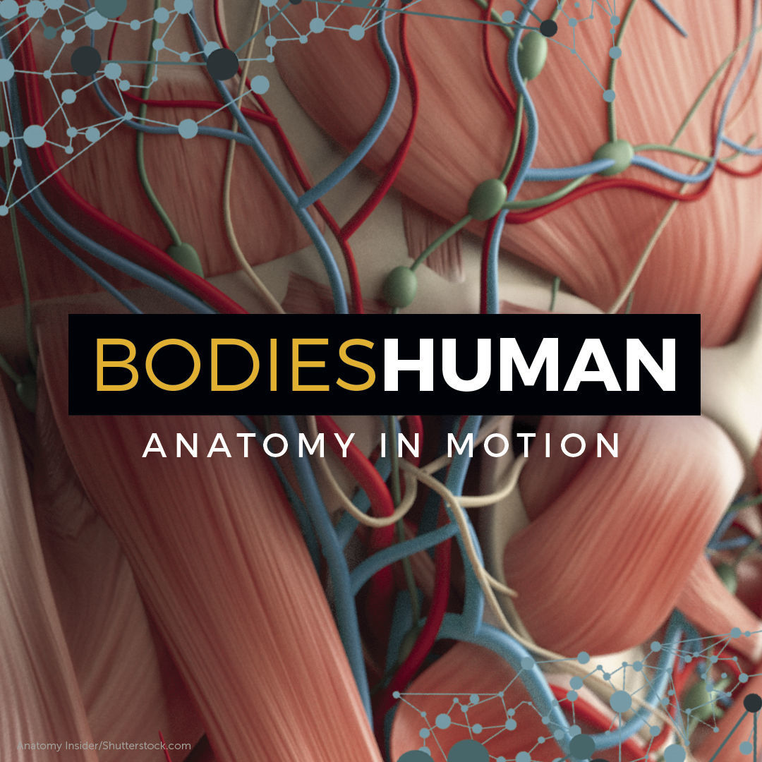 Mark Your Calendars Bodies Human Anatomy In Motion Starts Friday