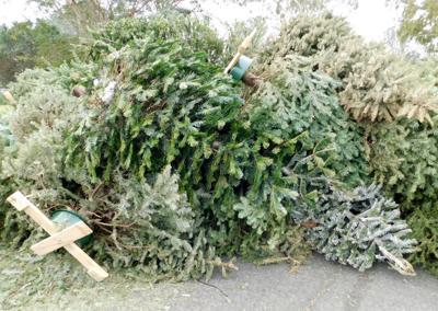 Christmas_tree_recycling