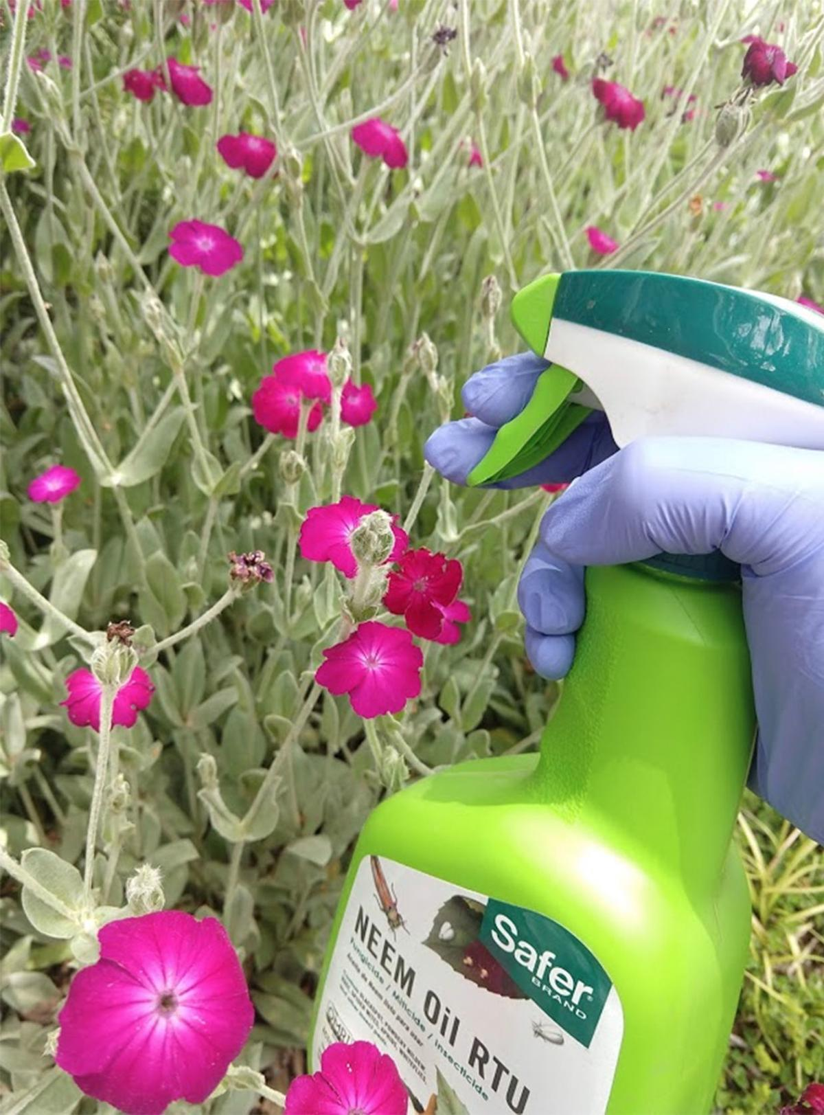 Spraying flowers
