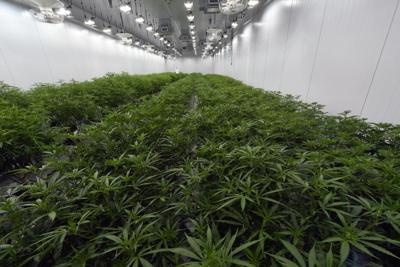 Marijuana Legalization Northeast