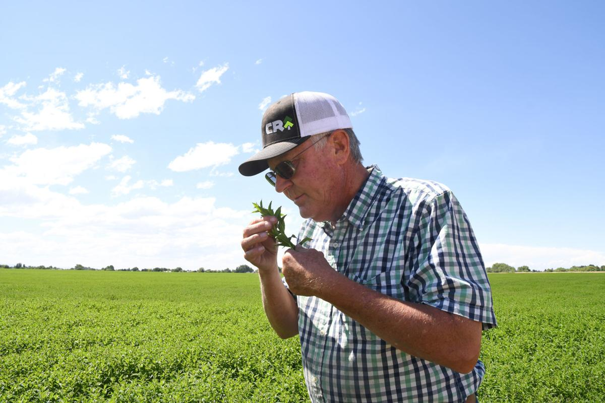 Meridian mint farmer retires after 41 years | Local News