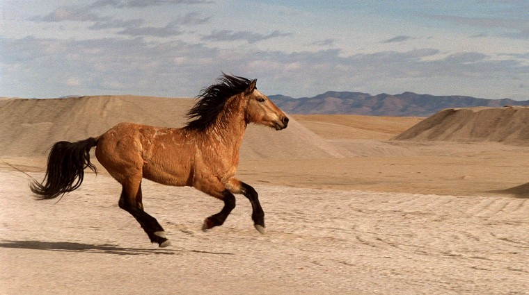 Feds Plan Roundup For 3 500 Wild Horses Burros State