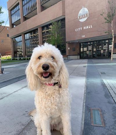 dog license.jpg