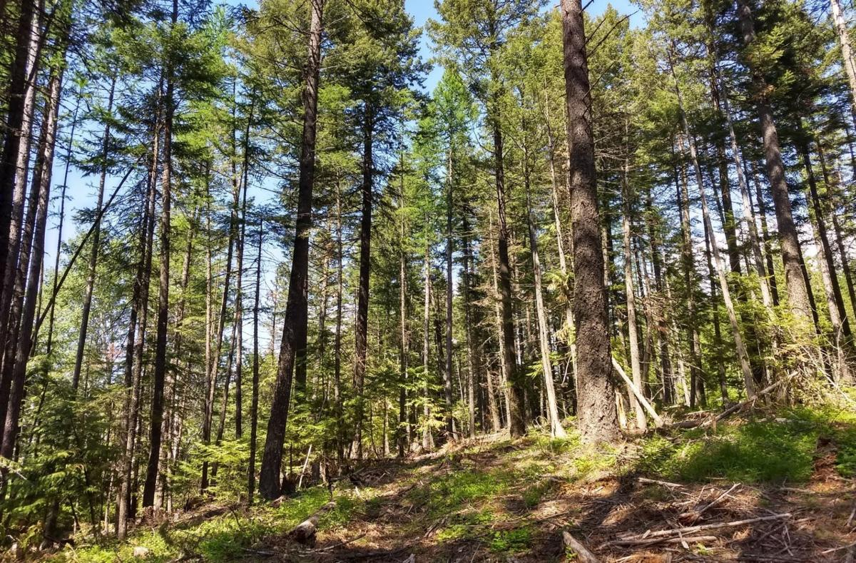 Idaho Department of Lands timber land acquisition (copy)