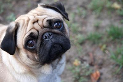 Reverse Sneezing Pet Talk