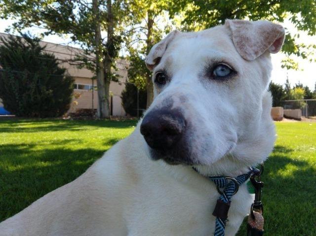 MCR Pet of the Week: Rigby