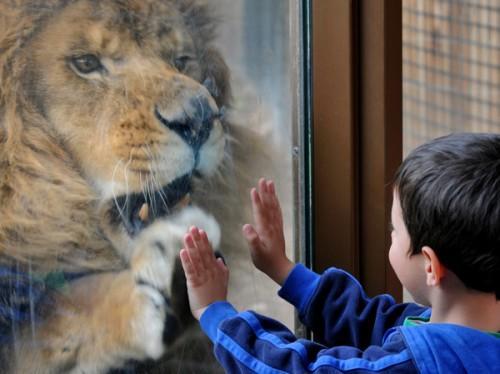 Calendar Notebook 2016 : Zoo boise a great family outing idaho press tribune