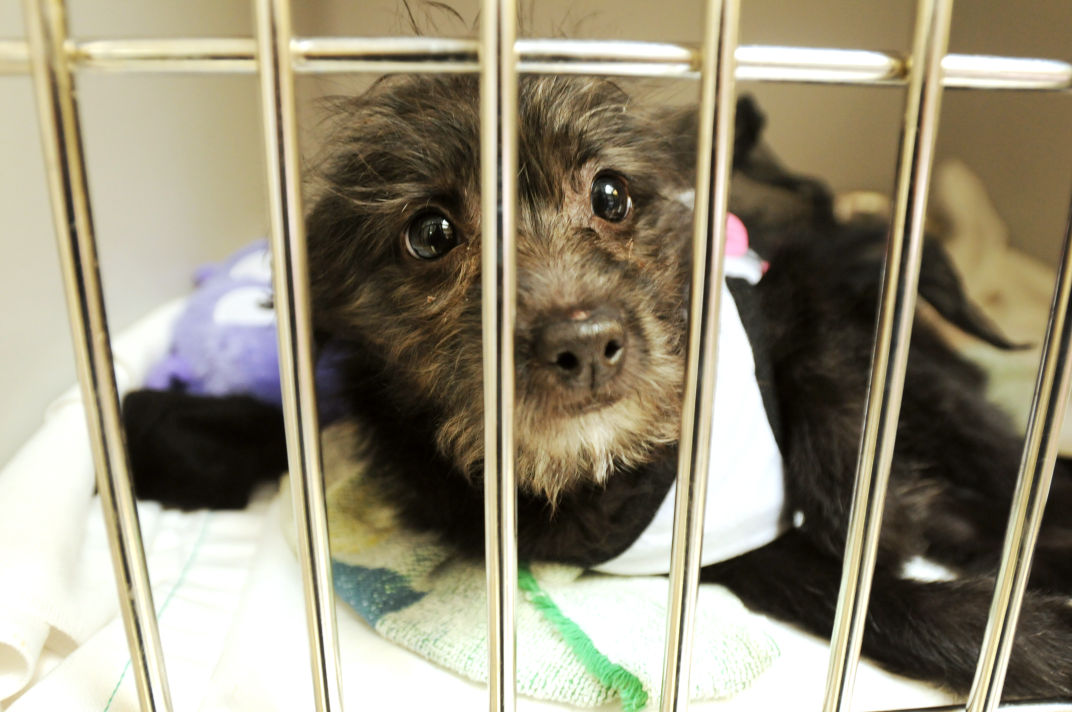 West Valley Humane Society