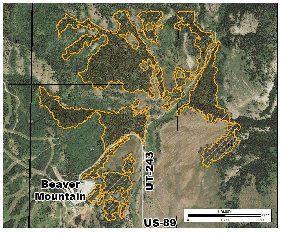Beaver Mountain Logging Detail