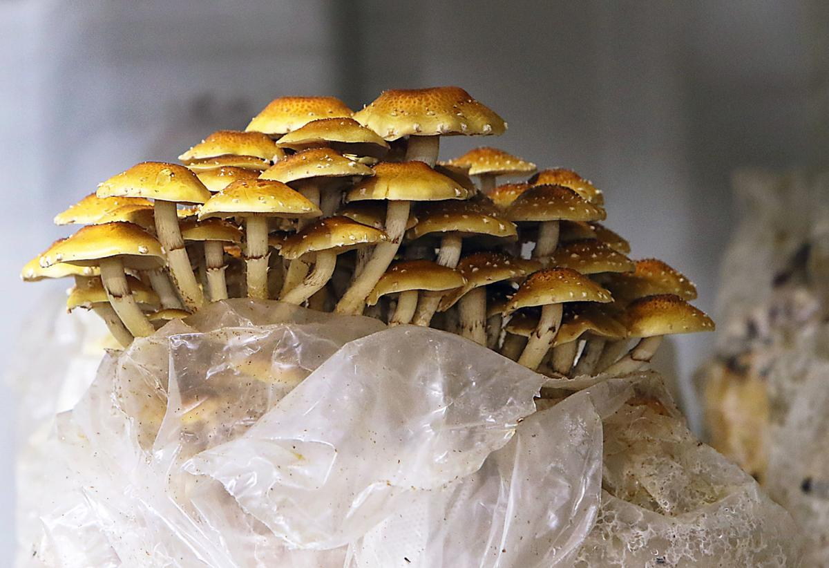 Gourmet Mushrooms