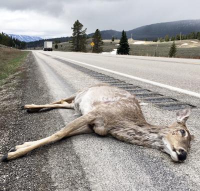 Watch for wildlife on highways