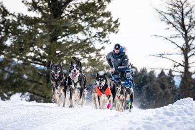Idaho dog sledding