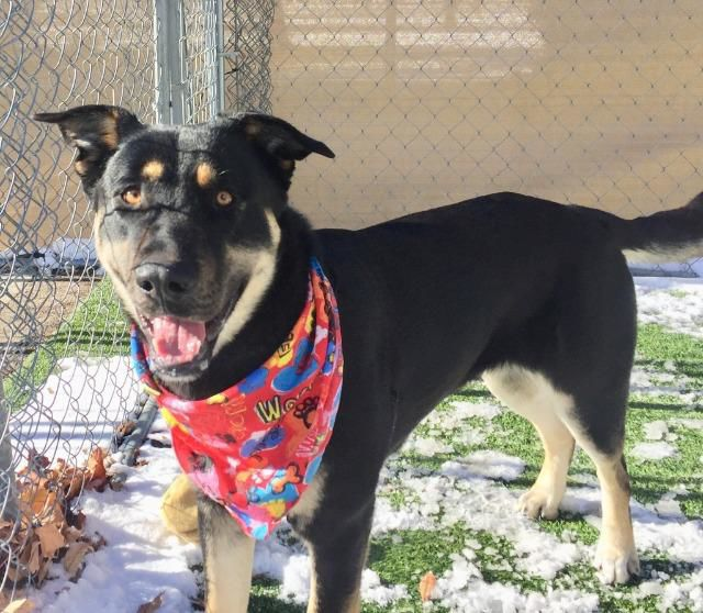 MCR Pet of the Week: Koda