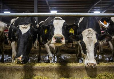 Research Dairy