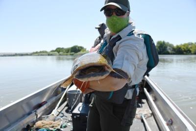 F & G move catfish