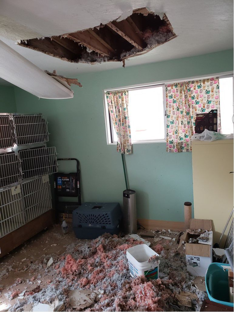 collapsed ceiling at Pet Haven