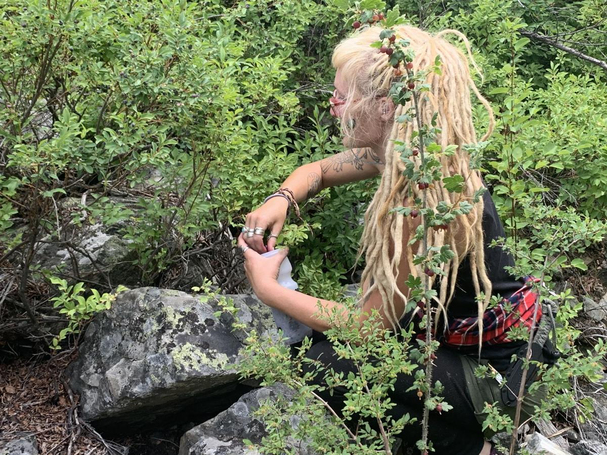 From the desk of Tom Claycomb: Picking wild huckleberries