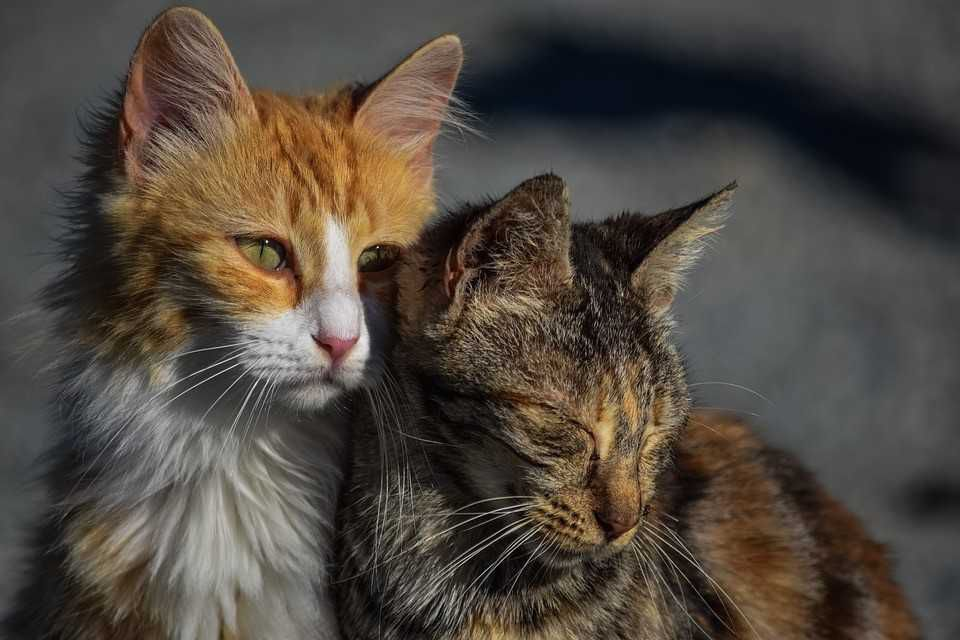 Best Heartworms In Cats Article