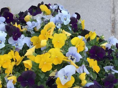 flowers 5-30-21