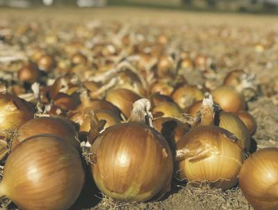Onions (copy)